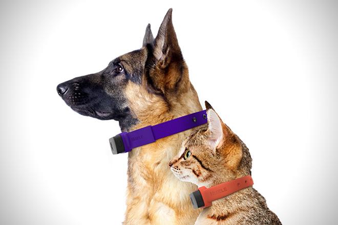 Nuzzle-GPS-Pet-Collar-3